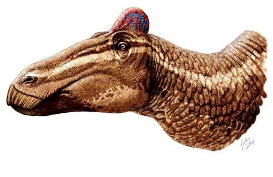 edmontosaurusgypsy-7166544