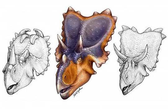 mercuriceratops-2529549