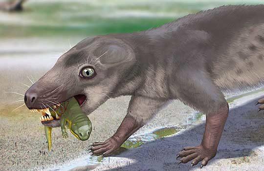 chthonosaurus-5783392