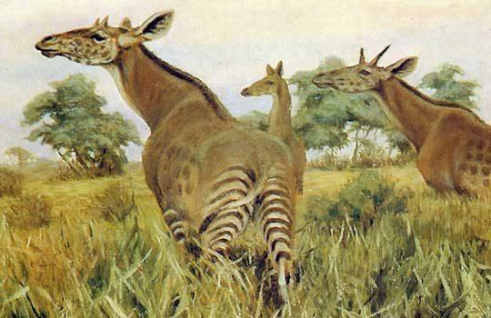 giraffa-3694891