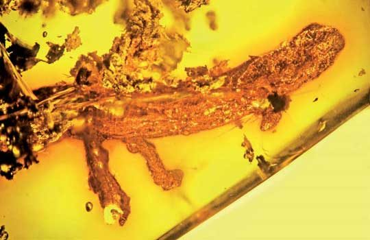 palaeoplethodon-4038767