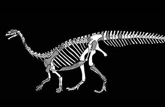 sefapanosauruses-9319010