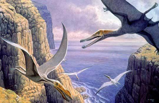 pterobreath-4945253