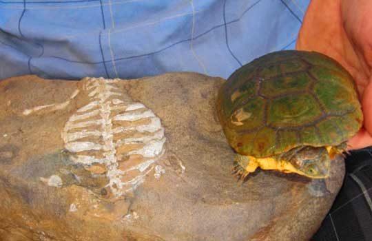 turtleshell-7900005
