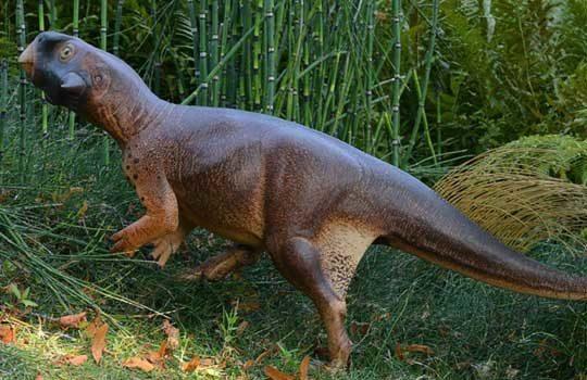 psittacosaurus1-5504244