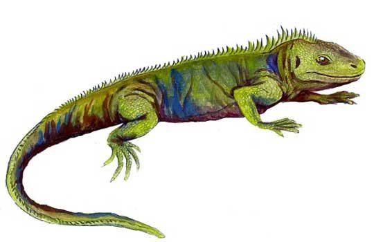 clevosaurus-3384209