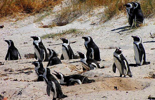 pingvin-6267352
