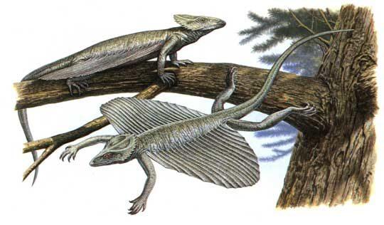 coelurosauravus-9661436