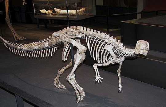 dysalotosaurus-2251835