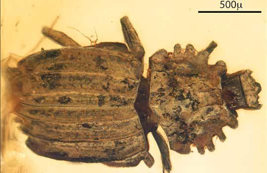 cretonthophilus-4806962