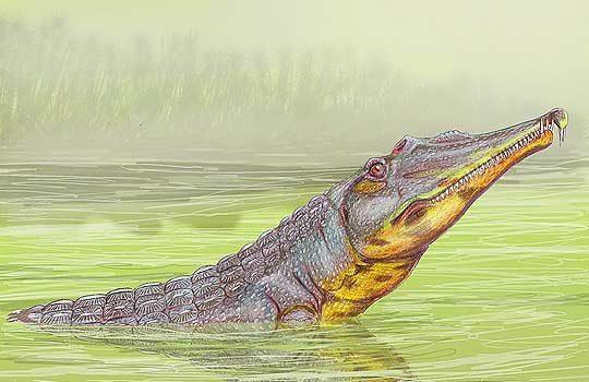machaeroprosopus-7590189