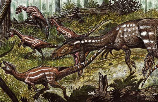 tachiraptor-9753748