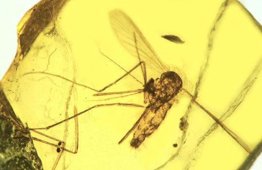 malaria-5782183