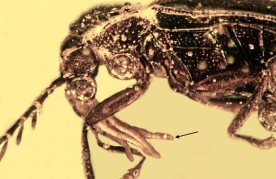 pollinus-4949333