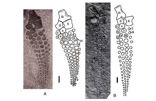 shastasaurus2-3936528