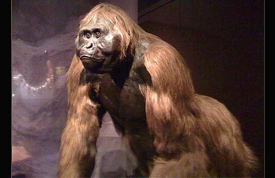 gigantopithecus-7823350