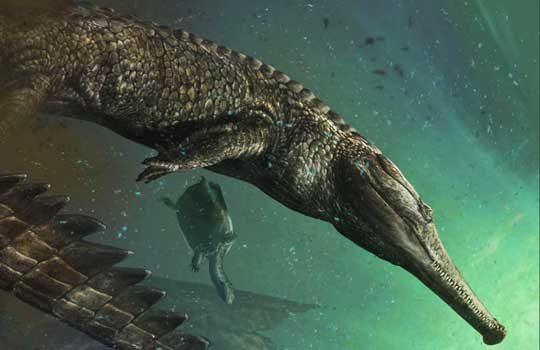 machimosaurus-8151454