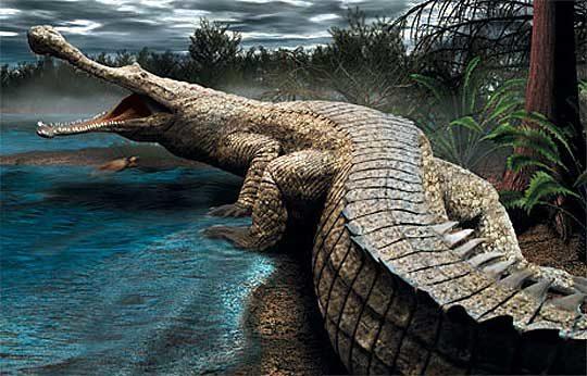 crocodl-6817729