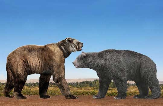 giantbears-5091316