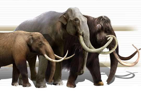 mastodonts-3624552