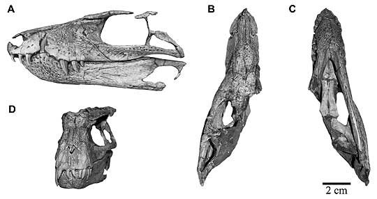 gondwanasuchus3-4010187