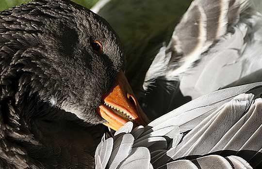 teethbirds-9391767
