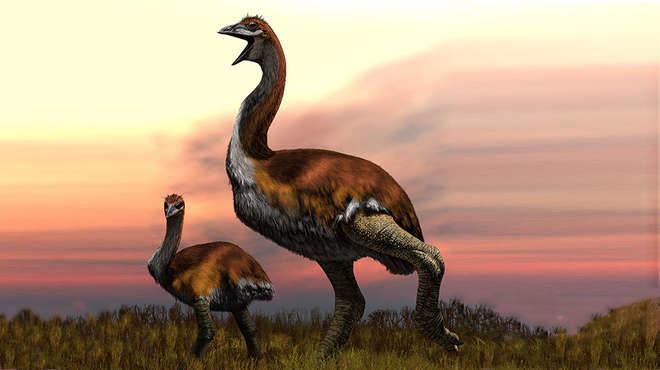 Ученые обнаружили самую тяжелую птицу в мире. Она жила всего лишь тысячу лет назад
