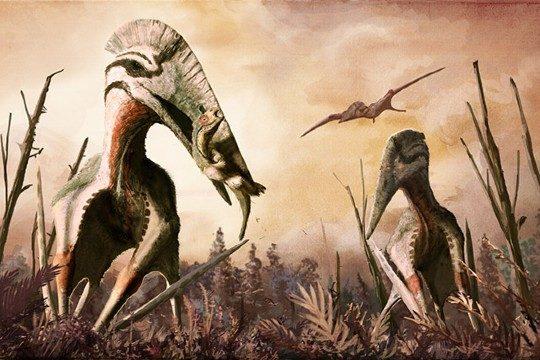 hatzegopteryx-5312929