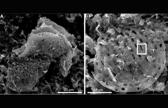 biomine-7494535
