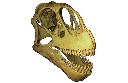 camarasaurscull-4162245
