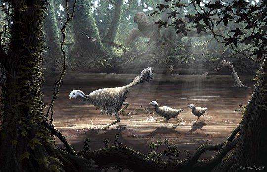 caudipteryx0-1-8826572