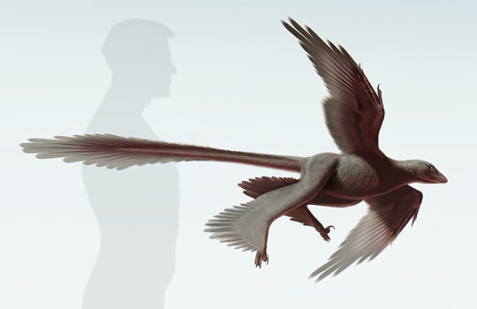 changyuraptor-5746430