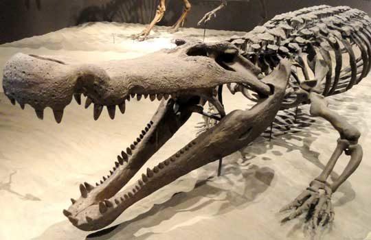 crocdeath-1905279