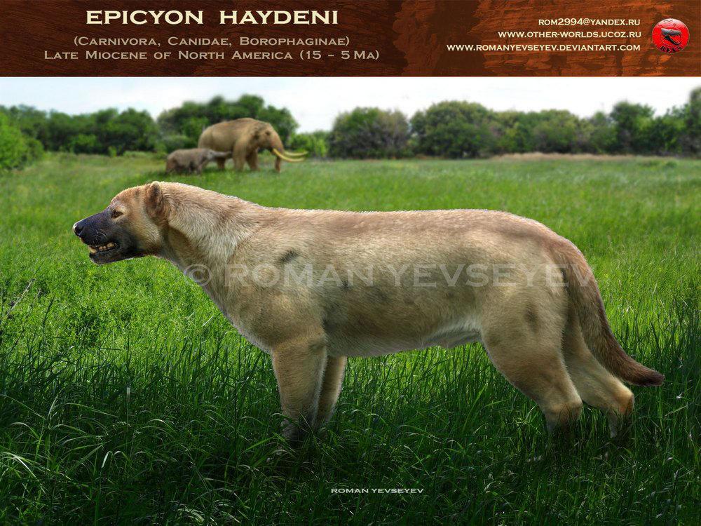 Эпичные собаки прошлого и самые крупные псовые в истории