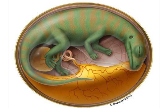 embrio-7838181