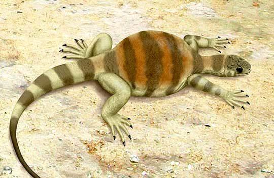 eunotosaurus-5343671