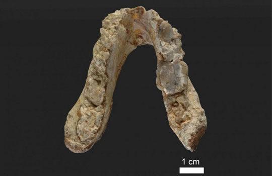 graecopithecus1-4056424