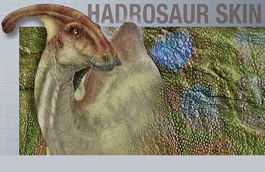 hadroskin-3917754