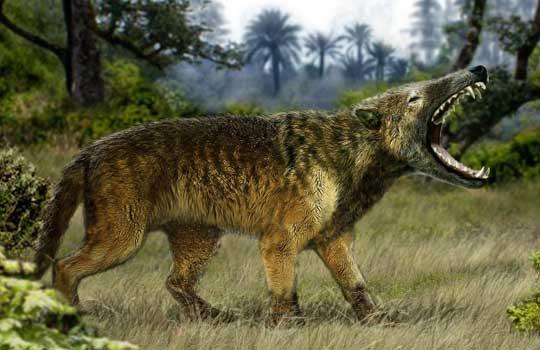 hyaenodon-8534111