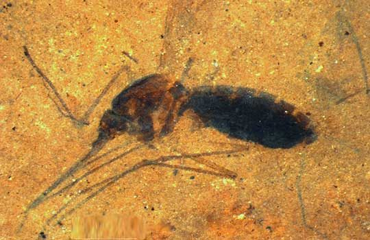 mosquito-9455227