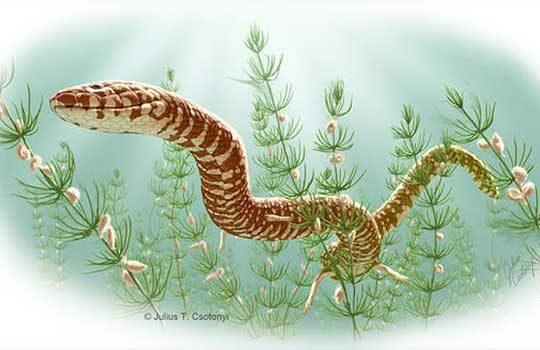 parviraptor-5664384