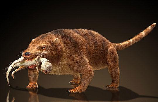 Кембрийский взрыв в истории млекопитающих