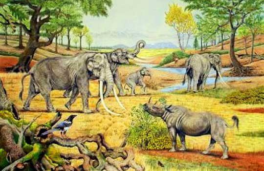 rewilding-4837377