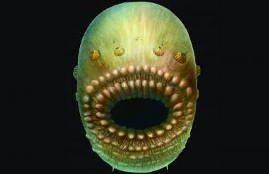 saccorhytus-8388516
