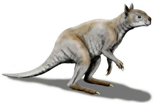 simosthenurus-7455415