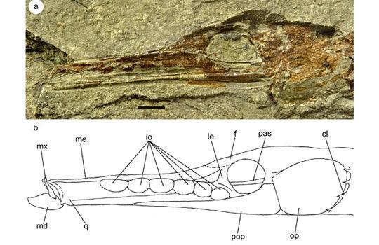 syngnathidae3-3598929