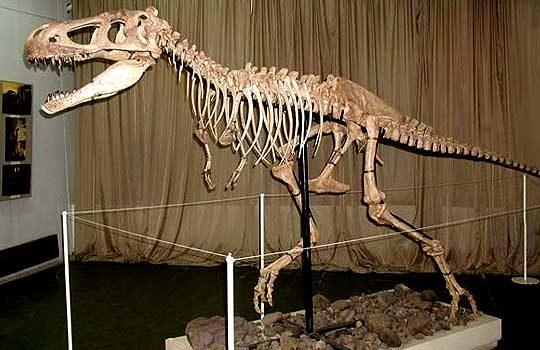 tarbosaurus-bones-2587390