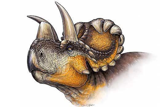 wendiceratops-7902867