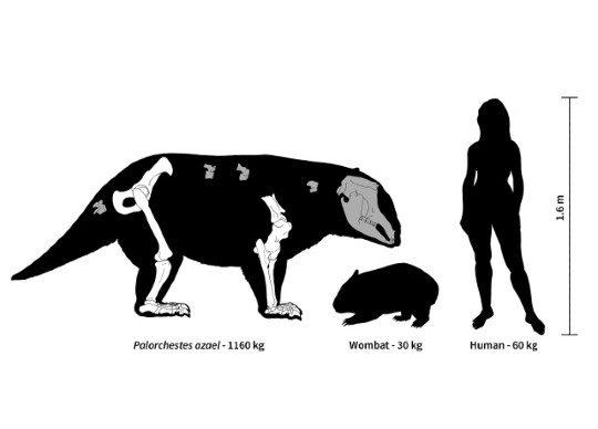 Семейство вымерших сумчатых Palorchestidae | Палорхестиды