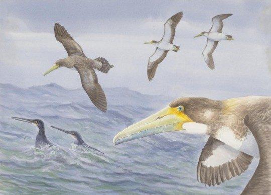 Обнаружен древнейший представитель семейства Pelagornithidae | Protodontopteryx ruthae